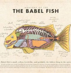 Babel fish, FHIR and general practitioners